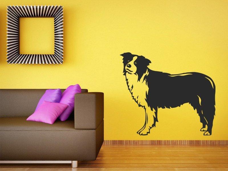 Samolepky na zeď Kólie 001 - Samolepící dekorace a nálepka na stěnu