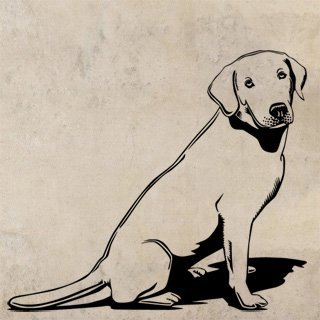 Samolepka na stěnu Labrador 003 - 138x120 cm