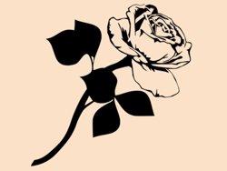 Samolepky na zeď Růže 009