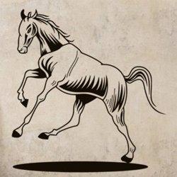 Samolepky na zeď Kůň 0367