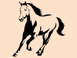 Samolepky na zeď Kůň 0393