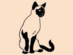Samolepky na zeď Kočka siamská 0450