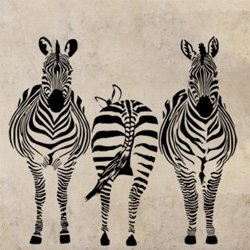 Samolepky na zeď Zebra 015