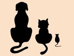 Samolepky na zeď Kočka a pes 002