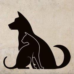 Samolepky na zeď Kočka a pes 0558